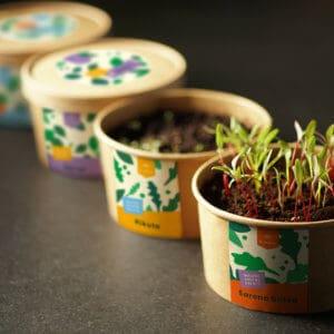 Baby salate / Špinat